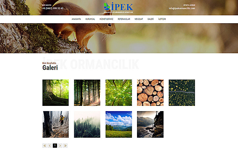 İpek Ormancılık web tasarımı